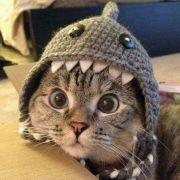 比特币nightcat