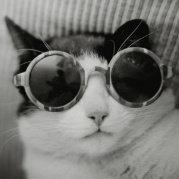 可爱的兔兔猫
