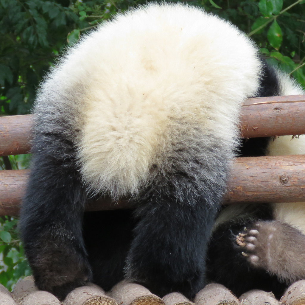 电影动物世界# @长隆野生动物世界 20180628李易峰广州长隆动物世界
