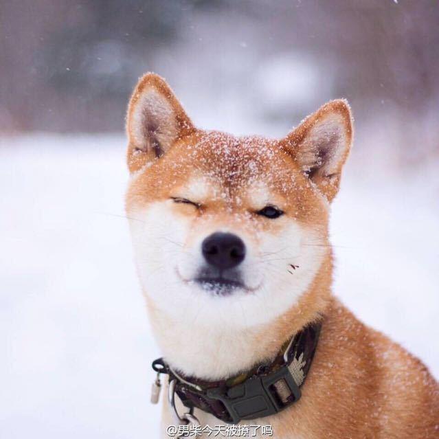 二五零号铺塘包子 #张翰# [doge][doge][doge]