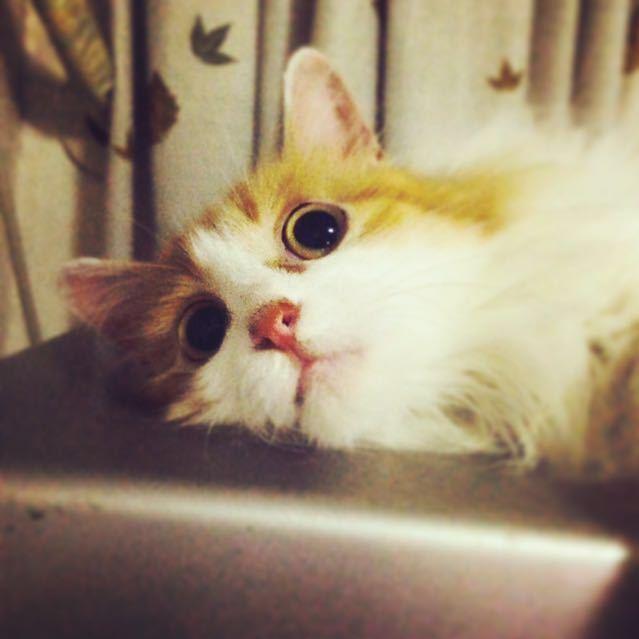猫咪图片大全可爱接吻