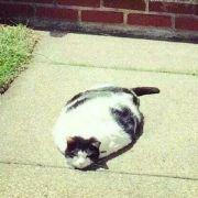 一个有猫饼的宝贝的微博表情带图片包小号的图片