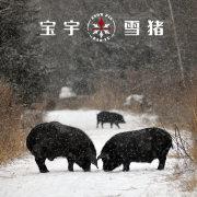 weibo宝宇雪猪
