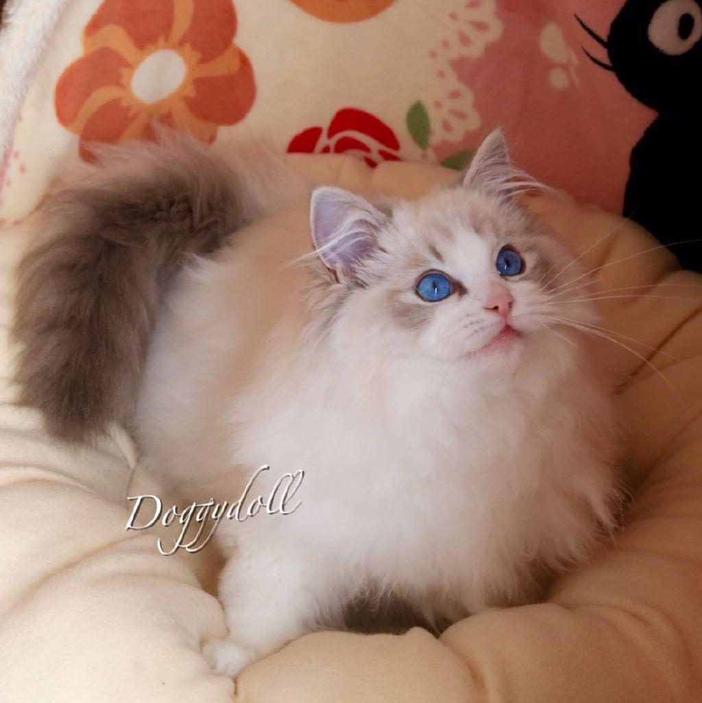 猫可爱亲亲动态图片