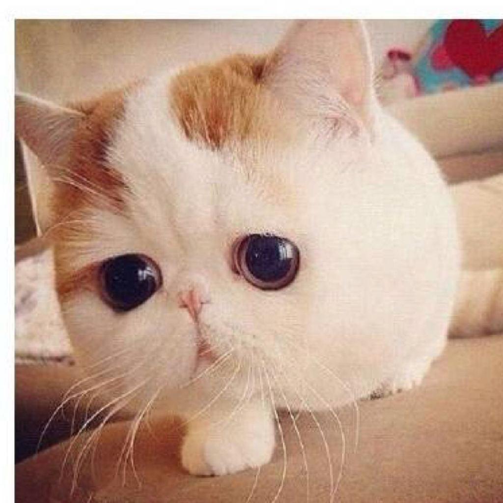 壁纸 动物 猫 猫咪 小猫 桌面 1024_1024