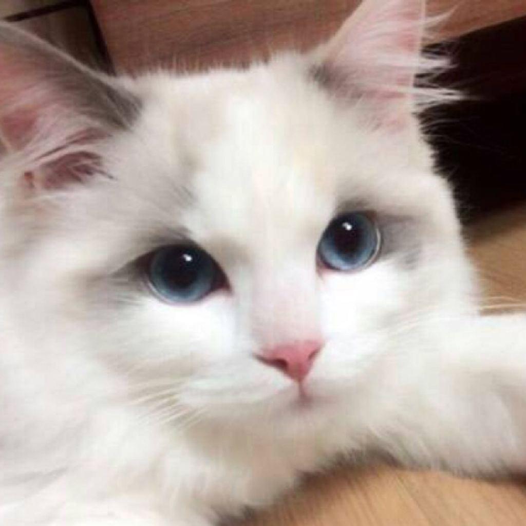 可爱猫仔图片背影