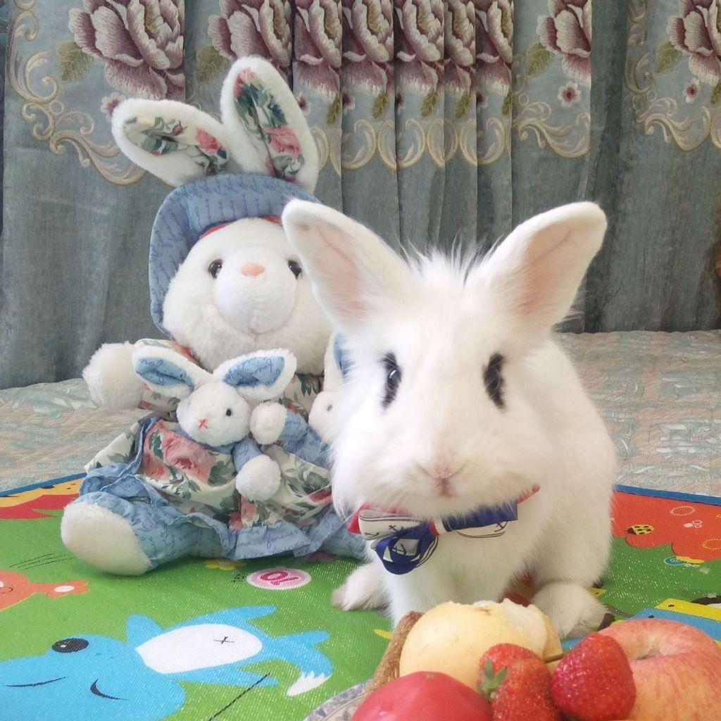呆萌兔的图片大全可爱