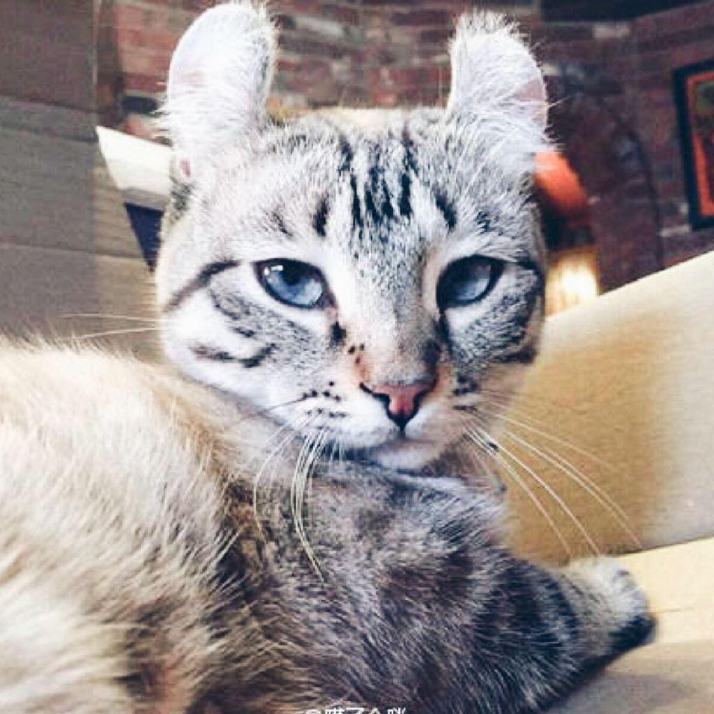 壁纸 动物 虎 老虎 猫 猫咪 小猫 桌面 1024_1024