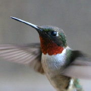 水工鸟1988