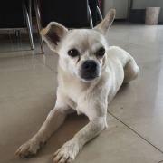 赵小米family,发布寻狗启示热爱宠物狗狗,希望流浪狗回家的狗主人。