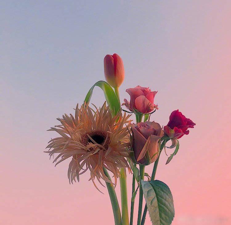 早安心语说说语录0608:大家顶着爱这个词,干尽了人间丑事