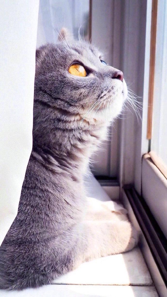 itotii早安心情句子0410:笑是哭的替代,强是弱的伪装