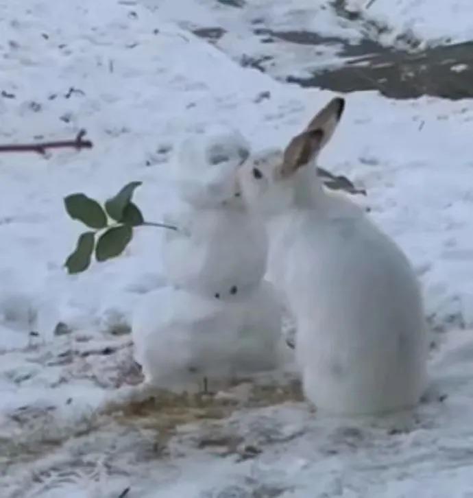 能对雪人做出这样的事情估计也没谁了
