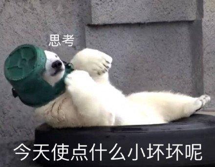 可爱白熊表情包