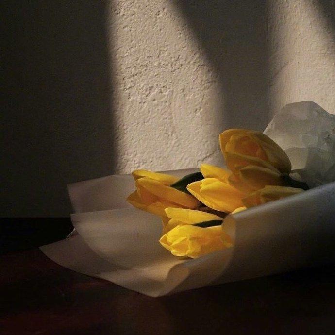 早安心语191123:感情不是讲开心吗,哪有讲输赢的
