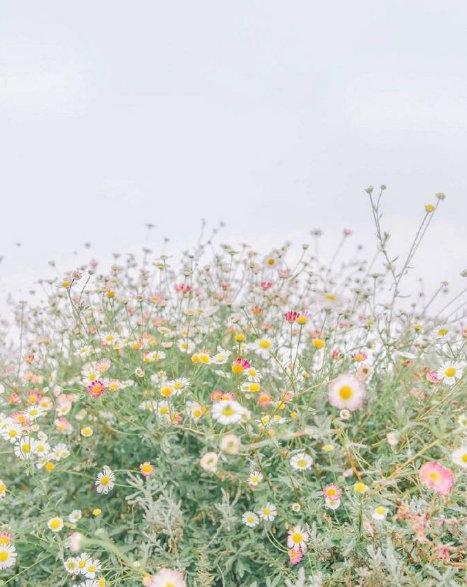 晚安心情短语191106:你像夏天的风,我未追完的梦