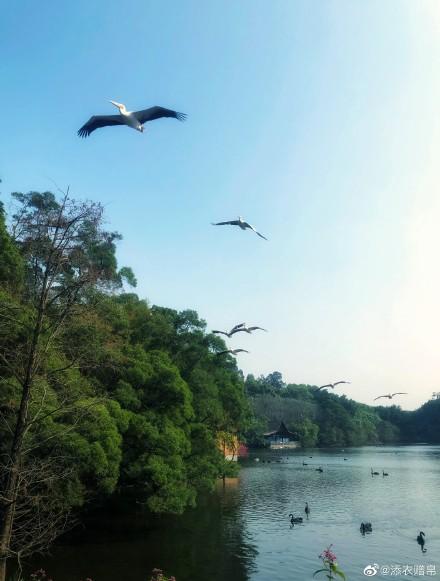 重点保护野生动物名录32年来善丝午首次大调整