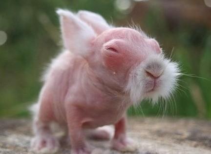 兔子很可爱对吧,但是剃了毛的兔子你看过么,简直丑哭了