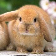 蹦过的兔兔