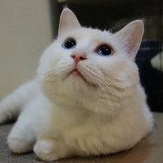 贱猫梁大白的幸福生活