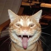 猫猫猫猫猫猫猫猫猫er