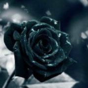 将记忆--葬送在--玫瑰