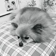 aclin219,发布寻狗启示热爱宠物狗狗,希望流浪狗回家的狗主人。