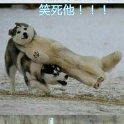 鲁一鲁人与动物_公众号:一零艺缘(小编)       +关注 私信 = 超过1000万人