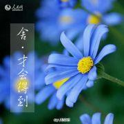 flower11060921