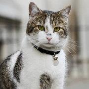唐宁街上的猫