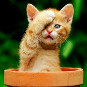 毛小喵猫猫健康