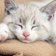 猫咪汆丸子