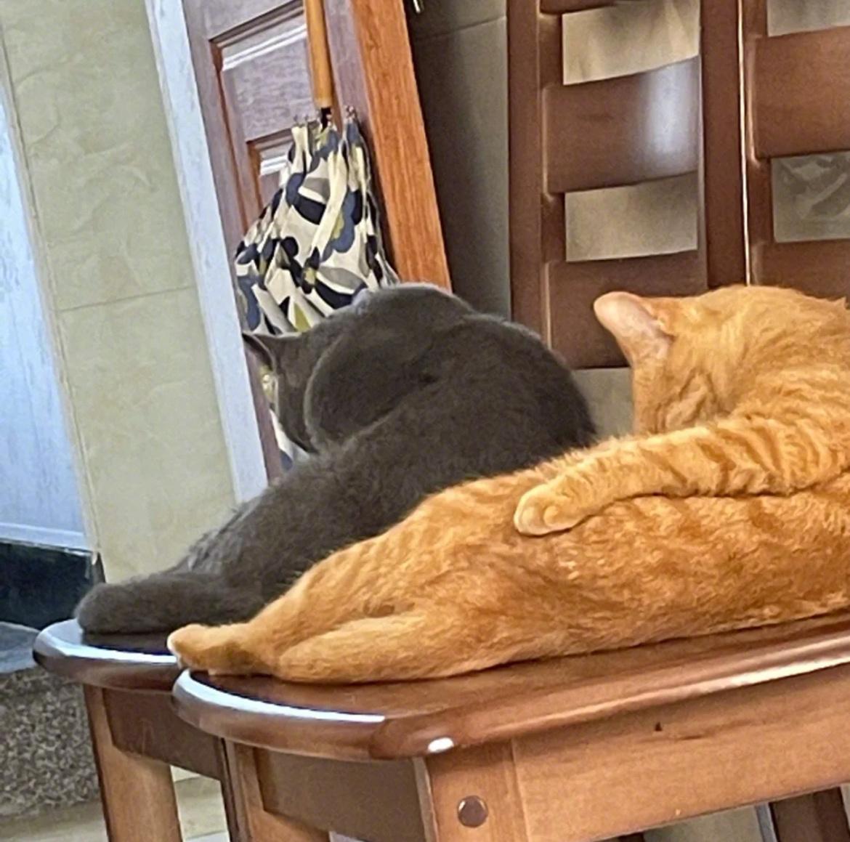 猫咪可以多有默契
