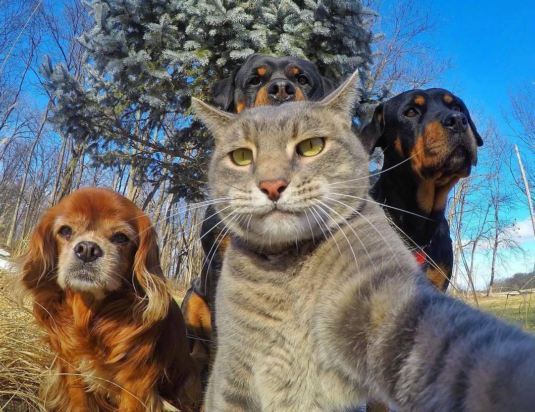 这是我见过最会自拍的猫咪,大哥范十足