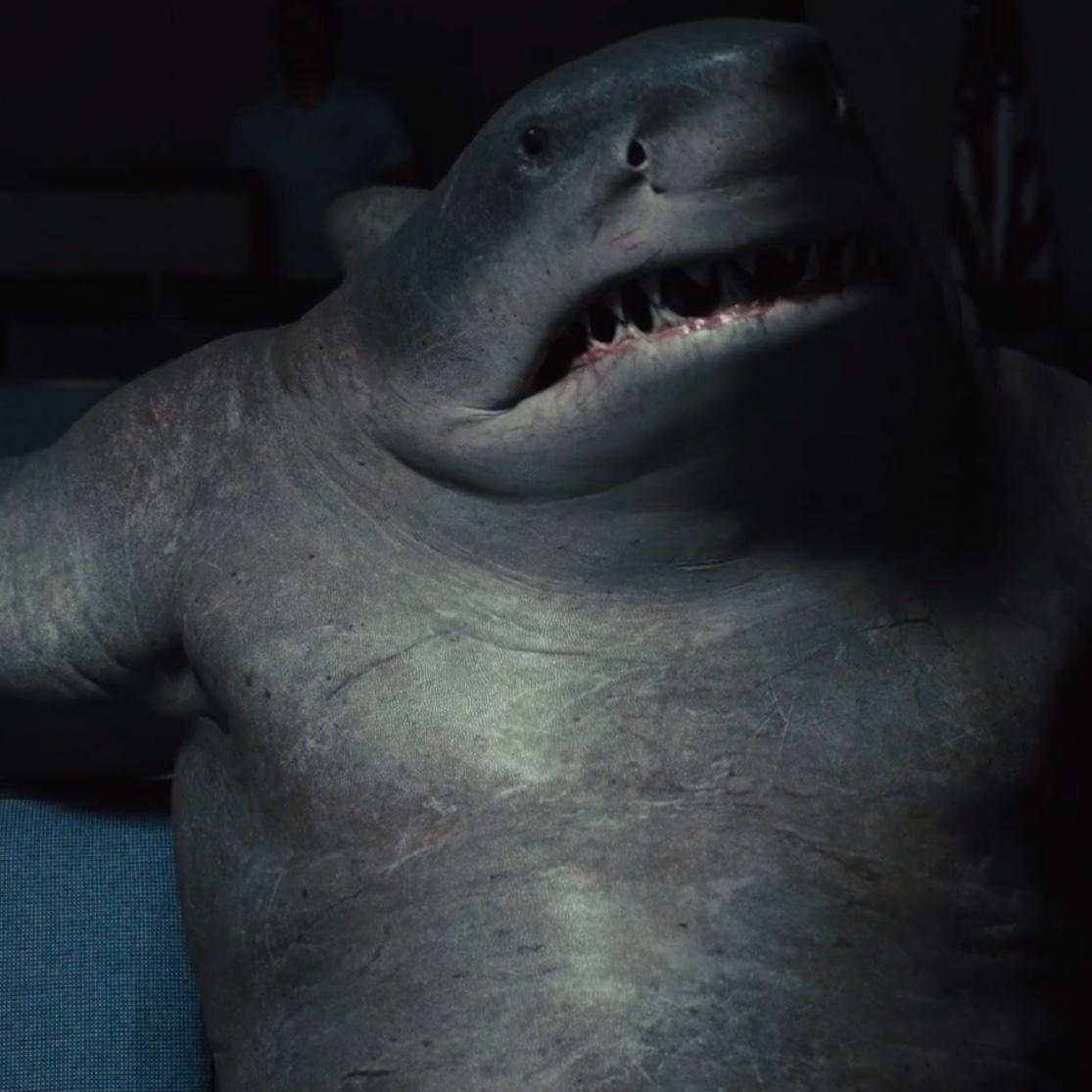 影视资讯鲨鲨太可爱了