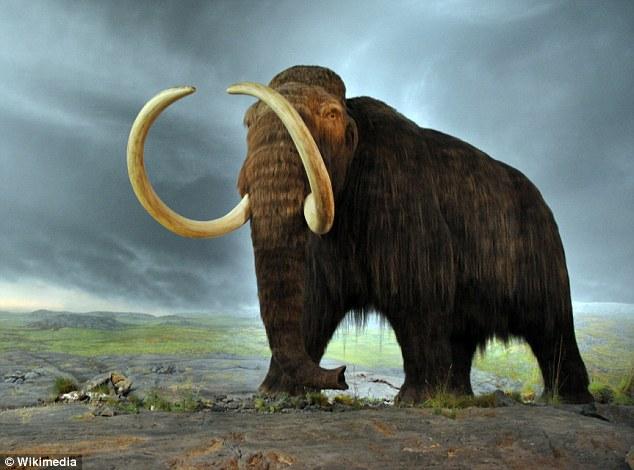 想要抑制全球变暖 科学家称复活猛犸象是一招的照片