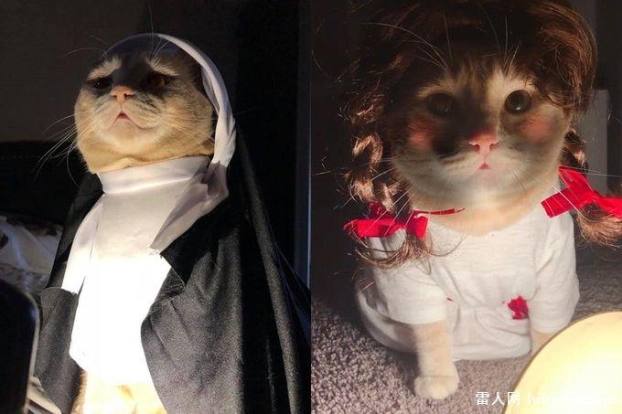 貓界鬼修女安娜貝爾?胖橘遭奴才狂換裝網笑:完全零殺氣
