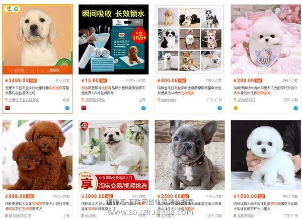 怎么样每天赚一千?步行街卖宠物狗的赚钱新玩法