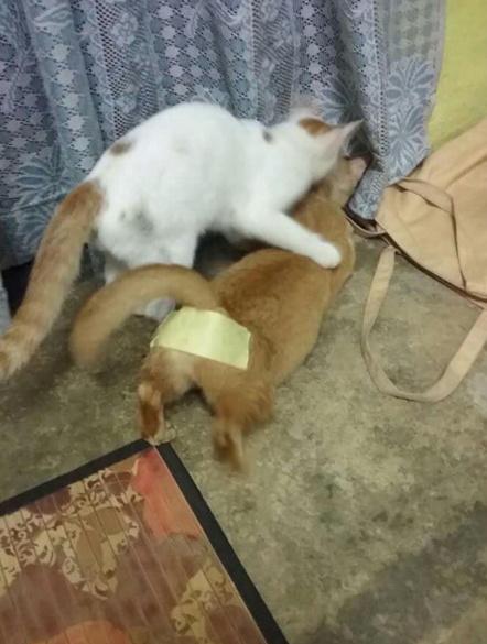 为了防止家里两只基佬喵互相怼对方 也是操碎了心