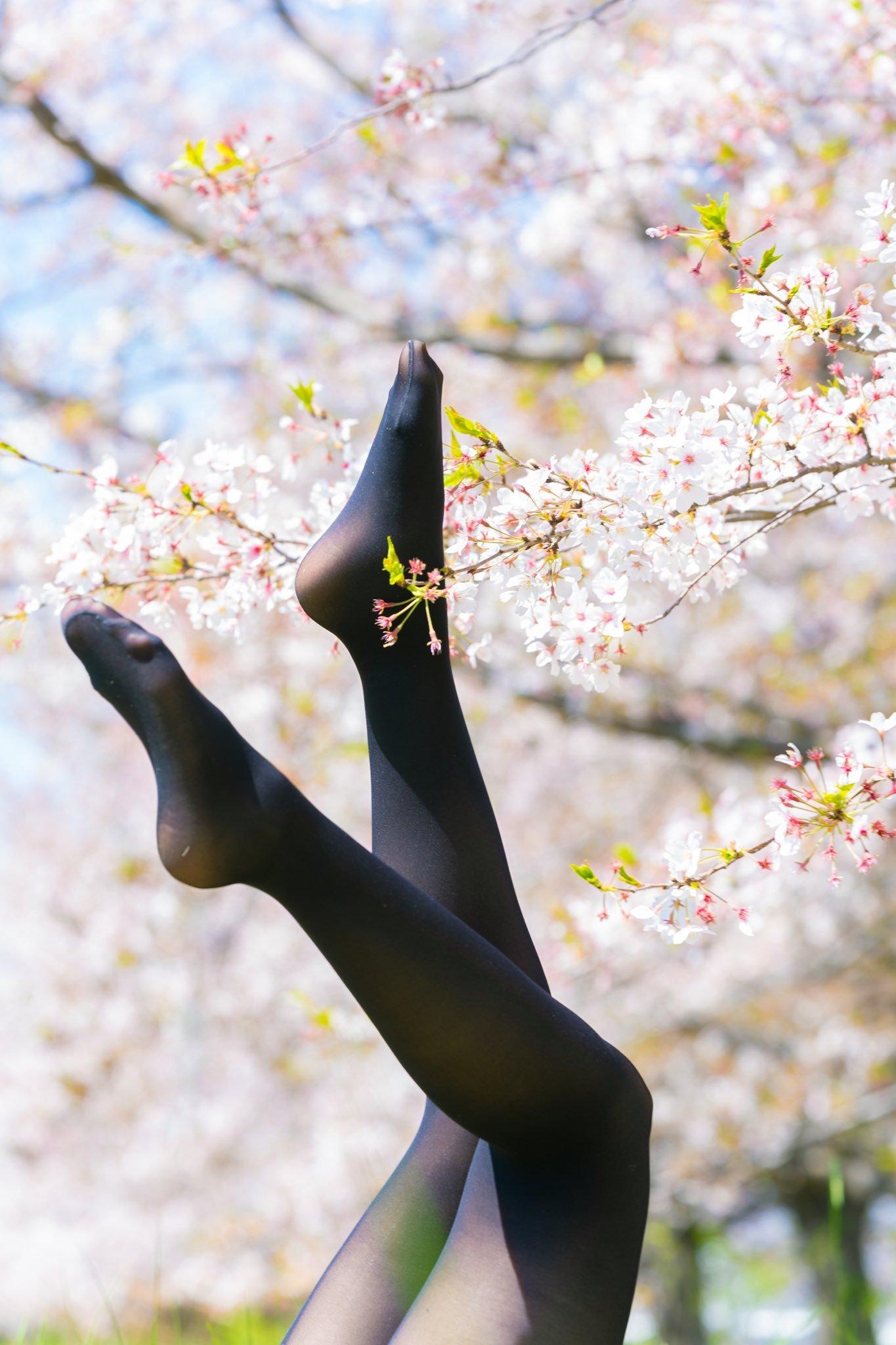 樱花与丝袜