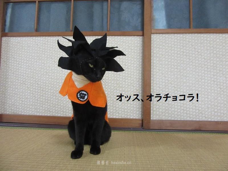 日本黑猫动画角色COS_和邪社01