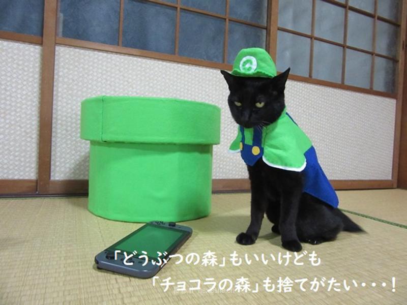 日本黑猫动画角色COS_和邪社25