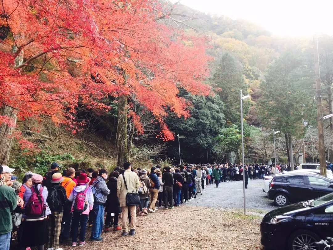 盘点日本旅行一年四季最佳时间避免堵在路上遇到囧途 (11)