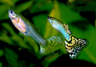 鱼鱼也会吸毒成瘾!?药毒物对褐鳟鱼的影响插图(1)