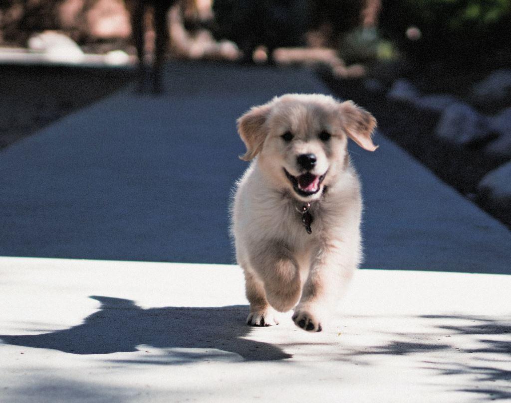经过长久驯化,狗的认知能力近似人类婴儿?插图
