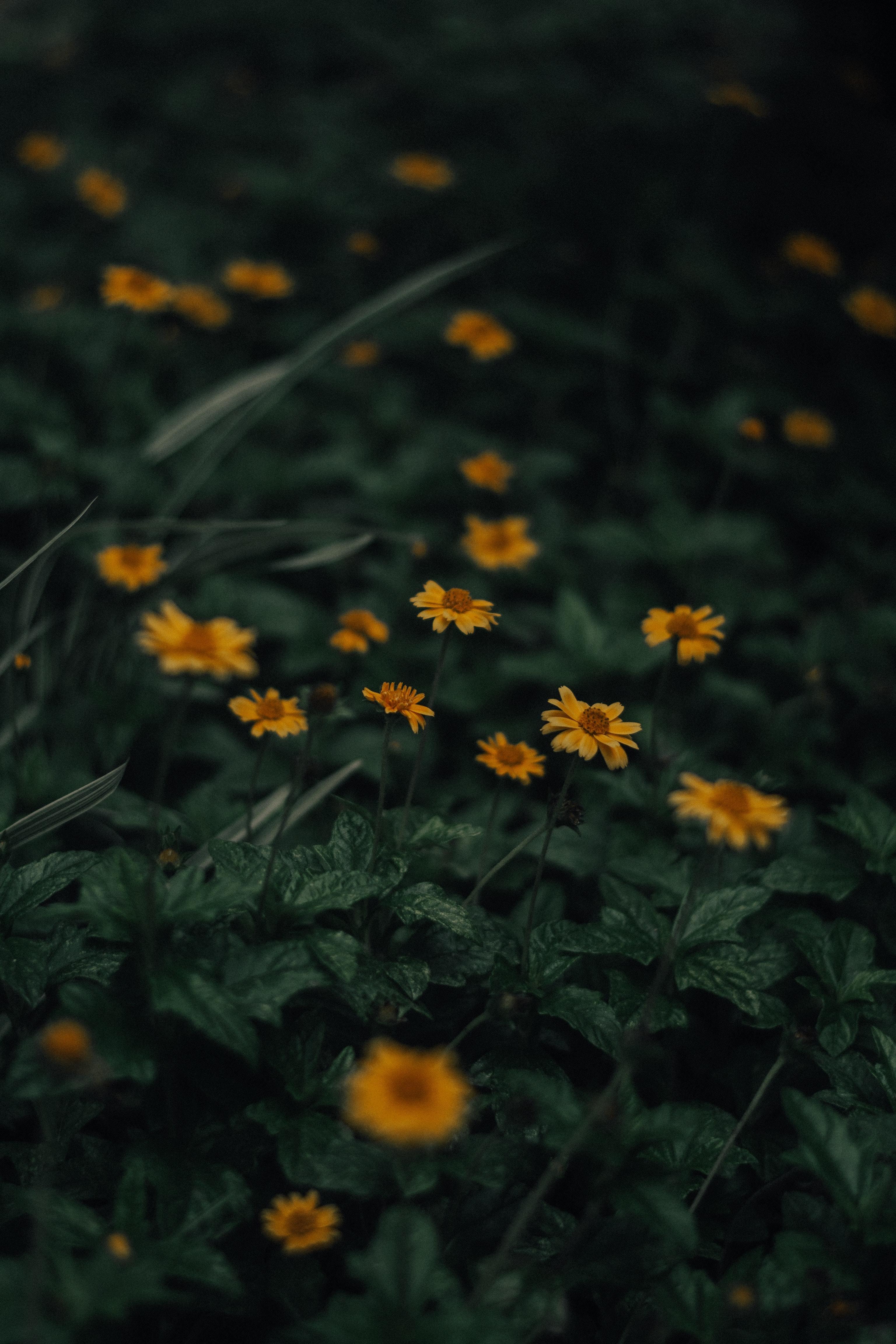 yellow-flowers-in-tilt-shift-lens-3848484
