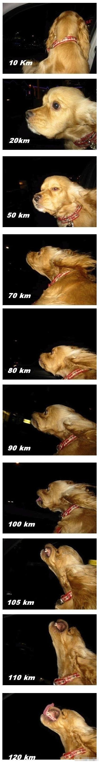不同车速狗狗的不同表情