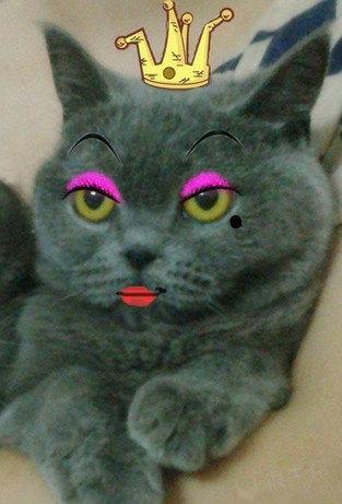 猫咪变身红太狼~