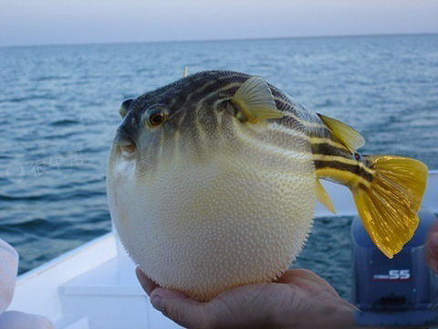 据说一个球掉进海里很久很久以后就变成了鱼~