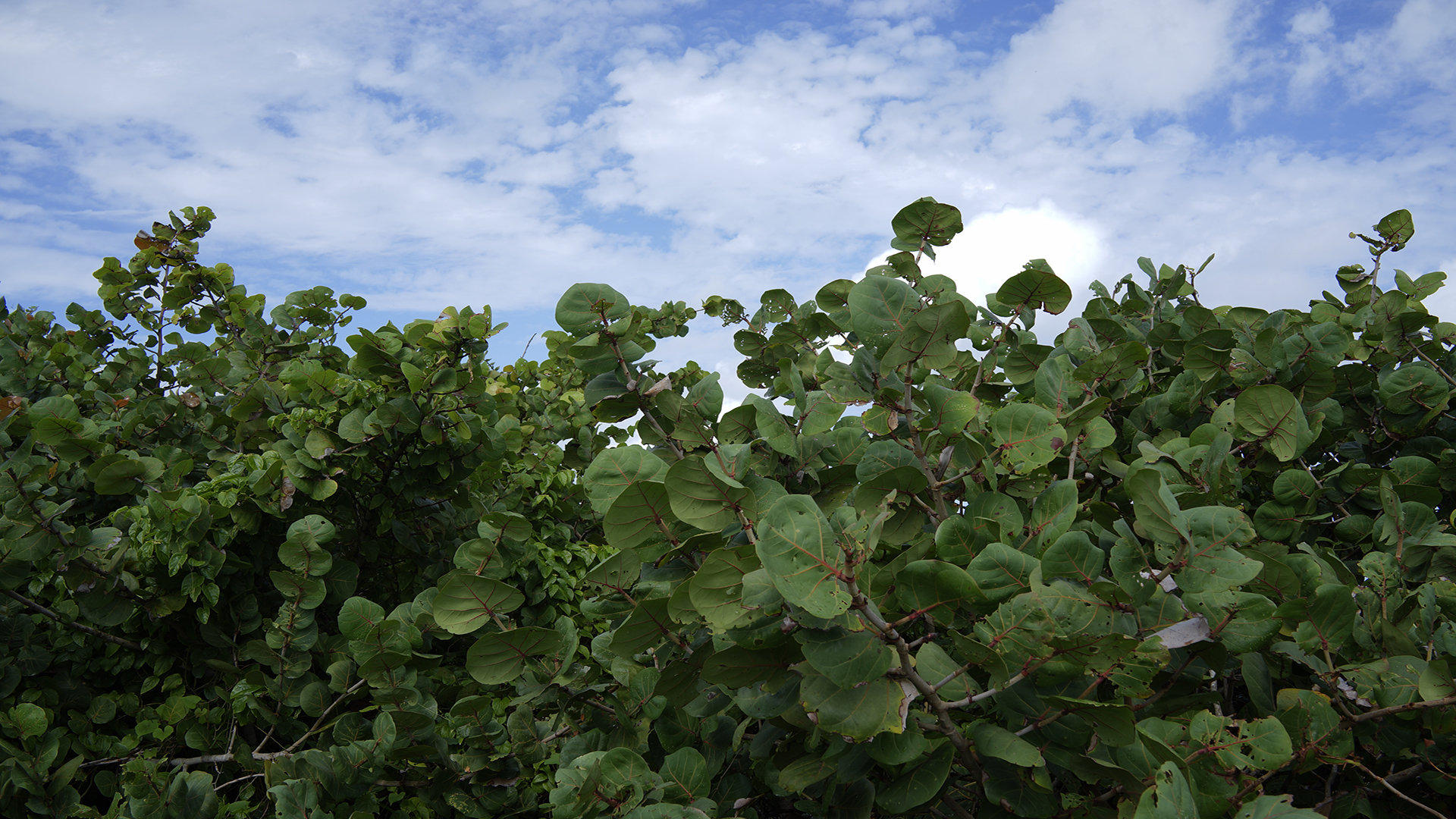 超值的移民选择计划 瓦努阿图移民